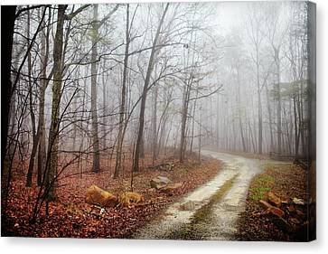 Jungle Journey - The Road Canvas Print by Skip Nall