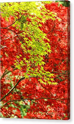 Leaves Canvas Print by HD Connelly