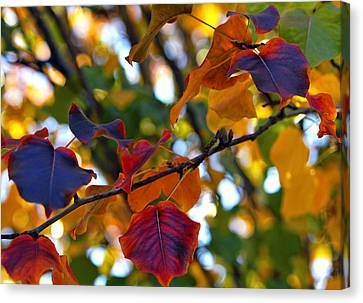 Leaves Of Autumn Canvas Print by Stephen Anderson