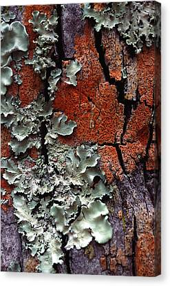 Lichen On Tree Bark Canvas Print by John Foxx