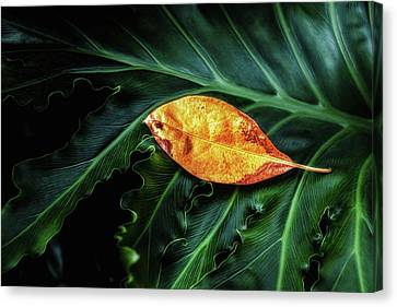Life Cycle Still Life Canvas Print by Tom Mc Nemar