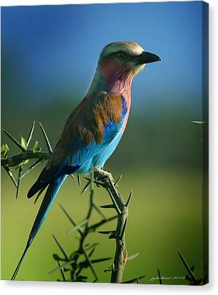Lilac Breasted Roller Canvas Print by Joseph G Holland