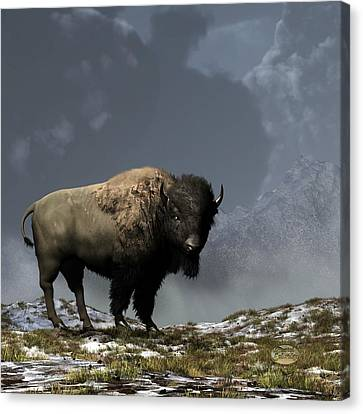 Lonely Bison Canvas Print by Daniel Eskridge