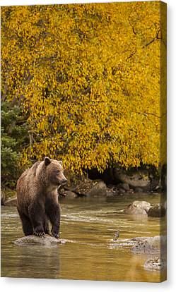 Looking For An Autumn Meal Canvas Print by Tim Grams