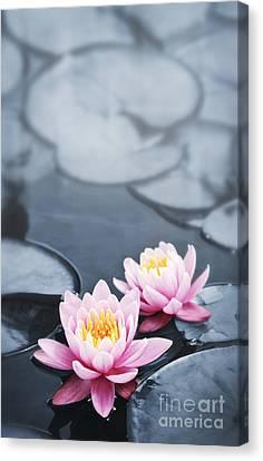 Lotus Blossoms Canvas Print by Elena Elisseeva
