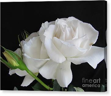 Margaret Rose Canvas Print by Joyce Woodhouse