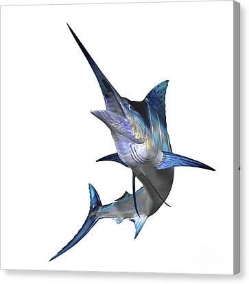 Marlin Canvas Print by Corey Ford
