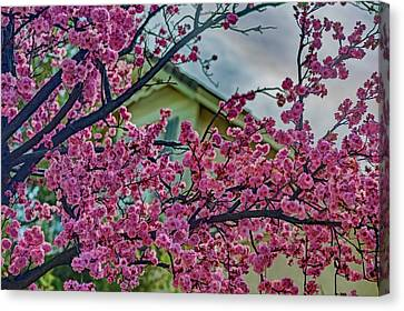 Memories Of Spring Canvas Print by Nancy Marie Ricketts
