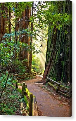 Muir Woods Canvas Print by Patricia Stalter