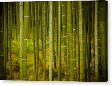 Mystical Bamboo Canvas Print by Sebastian Musial