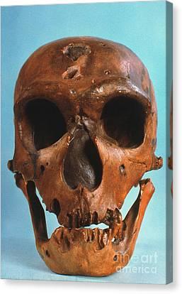 Neanderthal Skull Canvas Print by Granger