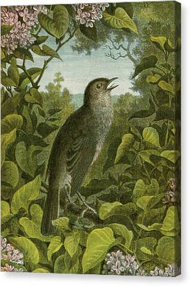 Nightingale Canvas Print by English School