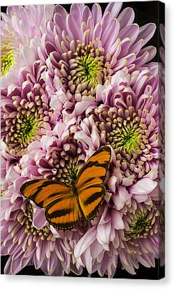 Orange Striped Butterfly Canvas Print by Garry Gay