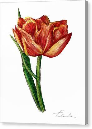 Orange Tulip Canvas Print by Danuta Bennett