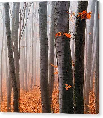 Orange Wood Canvas Print by Evgeni Dinev