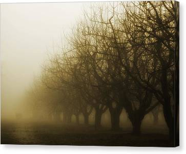 Orchard In Fog Canvas Print by Rebecca Cozart