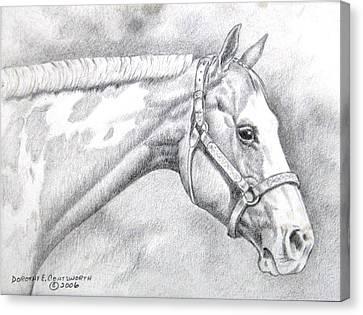 Paint Horse Canvas Print by Dorothy Coatsworth