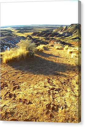 Painted Desert 2 Canvas Print by Patricia Bigelow