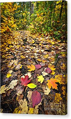Path In Fall Forest Canvas Print by Elena Elisseeva