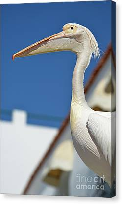 Pelican Canvas Print by George Atsametakis