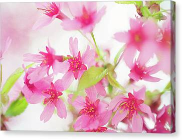 Pink Delight Canvas Print by Jenny Rainbow
