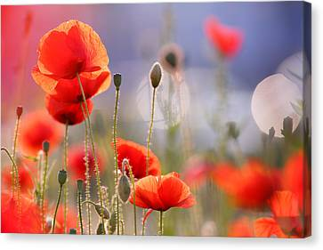Poppy Delight Canvas Print by Roeselien Raimond