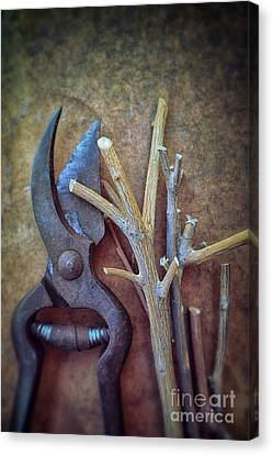 Pruning Scissors Canvas Print by Carlos Caetano