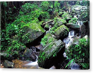 Rainforest Waterfall Canvas Print by Thomas R Fletcher