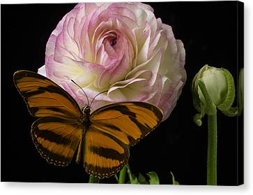 Ranunculus And Butterfly Canvas Print by Garry Gay