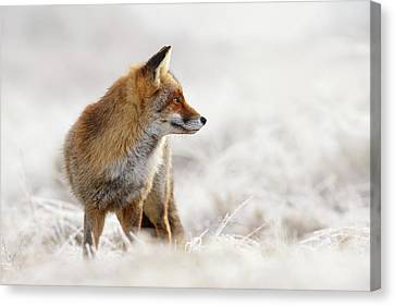 Red Fox, White World Canvas Print by Roeselien Raimond