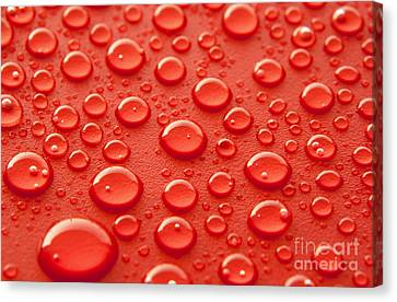 Red Water Drops Canvas Print by Blink Images