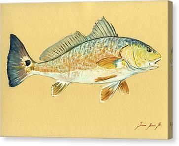 Redfish Painting Canvas Print by Juan  Bosco