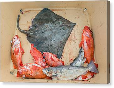 Redfish, Skate And Trout Freshly Canvas Print by Panoramic Images