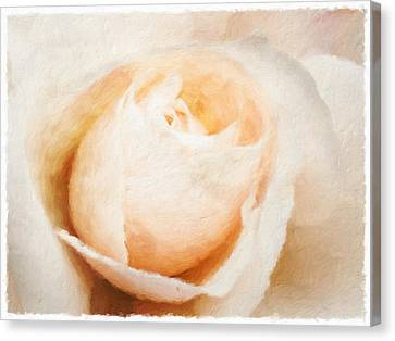 Rose Canvas Print by Jonathan Nguyen