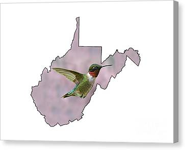 Ruby-throated Hummingbird  Beautiful Coloring Canvas Print by Dan Friend