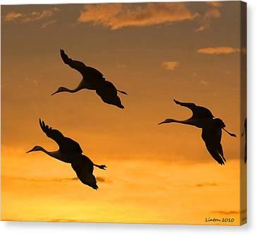 Sandhill Cranes At Dusk Canvas Print by Larry Linton
