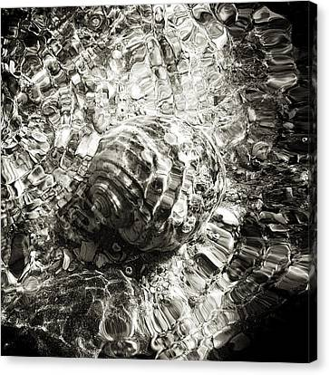 Sea Creatures, The Shell #1 Canvas Print by Valentin Gladyshev