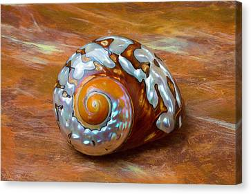 Sea Snail Shell Canvas Print by Garry Gay