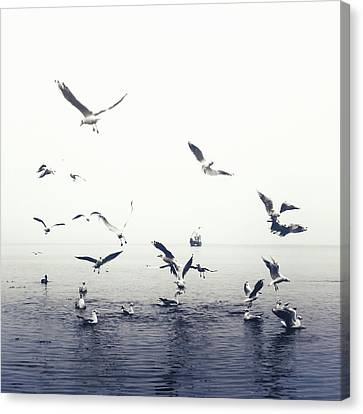 Seagulls Canvas Print by Joana Kruse