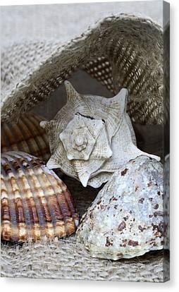 Seashells Canvas Print by Frank Tschakert