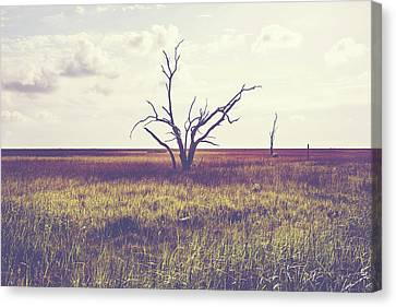 Sentinel Of The Marsh Canvas Print by Scott Pellegrin