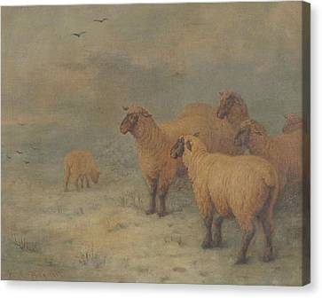 Sheep On Moorland Canvas Print by Henry Charles
