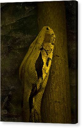 Snake Canvas Print by Svetlana Sewell