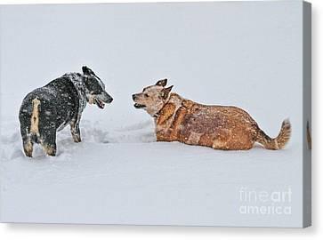 Snow Play Canvas Print by Elizabeth Winter