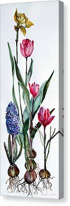 Spring Bulbs Canvas Print by Mindy Newman