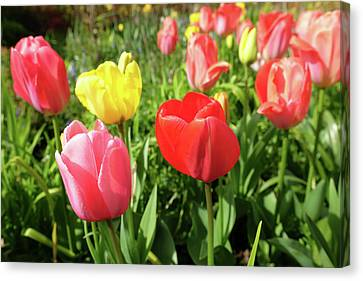 Spring Colour Canvas Print by Mark Severn