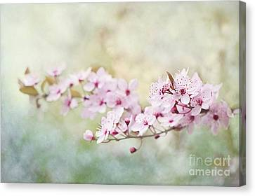 Spring Reverie Canvas Print by Jacky Parker