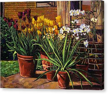 Spring Tulips And White Azaleas Canvas Print by David Lloyd Glover