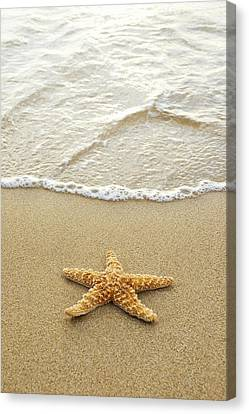 Starfish On Beach Canvas Print by Mary Van de Ven - Printscapes