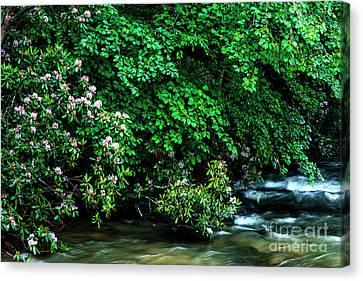 Summer Along Birch River Canvas Print by Thomas R Fletcher